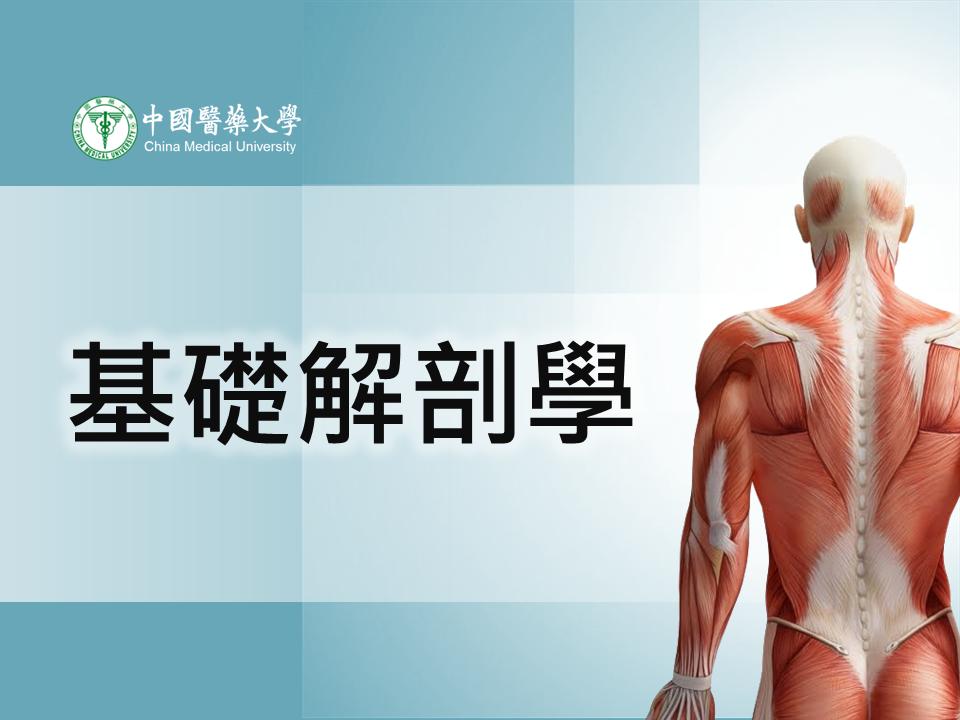 基礎解剖學(105-2學期)